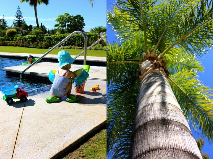 pool palm sommar